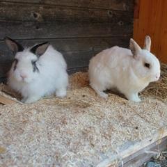 Max und Moritz(2014)Kaninchen/Kleintiere