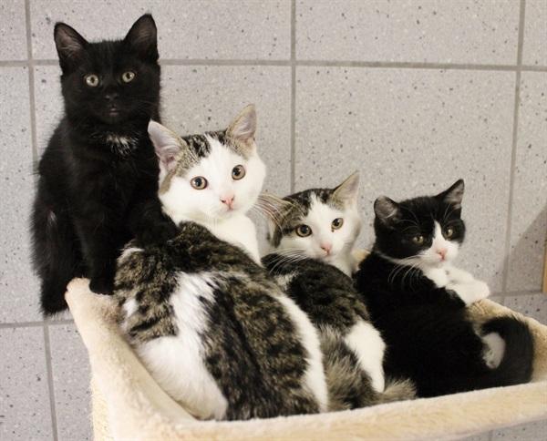 Welttierschutztag: Zum Wohl der Katzen