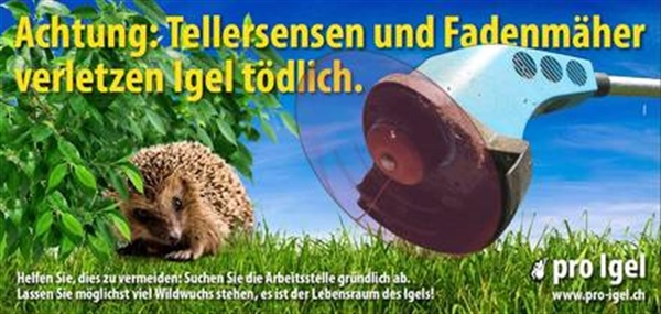 Achtung Igel