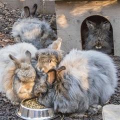 Winnie, Flöckle und, Flynt (2014)Kaninchen/Kleintiere