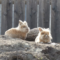 Strupfi und Mäx(2010)Löwenkopf Kaninchen/Kleintiere