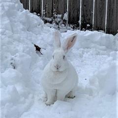 Lady(2020)Kaninchen/Kleintiere