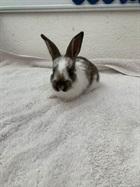 Belize(2021)Kaninchen/Kleintiere