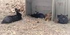 Pepper/w (2017), Chip/m und Cooper/m(0)Kaninchen/Kleintiere