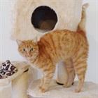 Andy (2009)EHK/Katzen