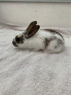 Oman(2021)Kaninchen/Kleintiere