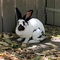 Belinda(2016)Kaninchen/Kleintiere