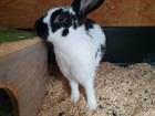 Tripi(2021)Kaninchen/Kleintiere