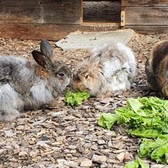 Winnie, Flynt und Rosemarie (2014)Kaninchen/Kleintiere