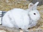 Xabea(2017)Kaninchen/Kleintiere