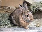Egon(2014)Kaninchen/Kleintiere