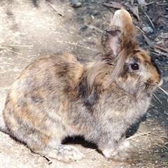 Gretel(2017)Kaninchen/Kleintiere