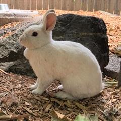 Schneewittchen(2018)Kaninchen/Kleintiere