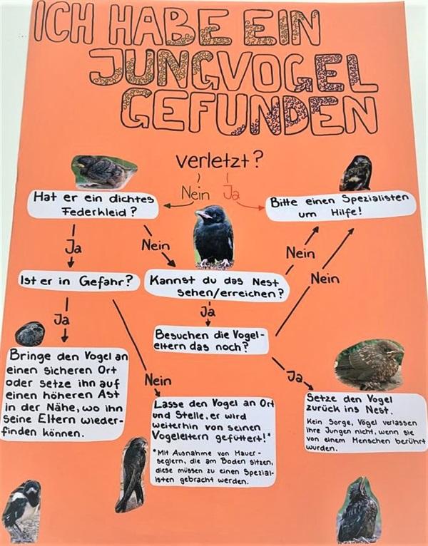 Jungvogel: