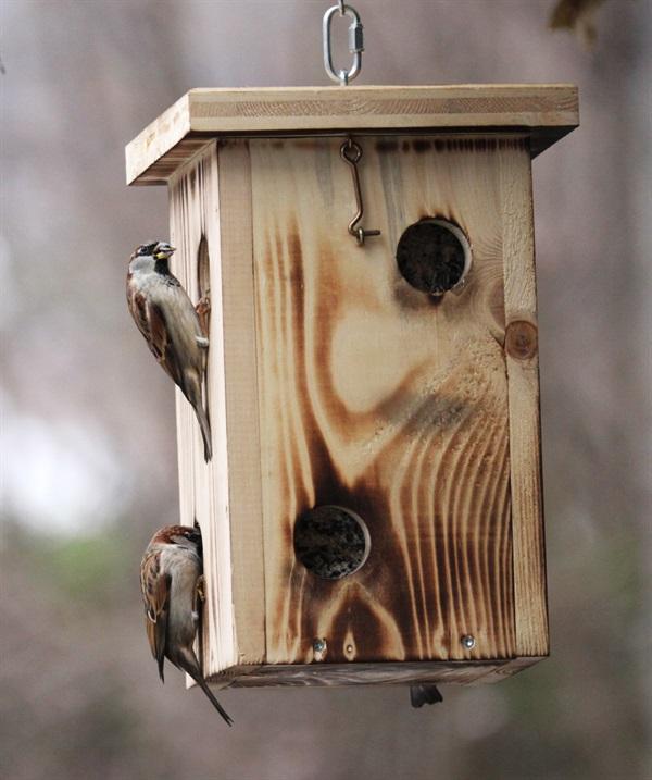 Sollen Vögel im Winter gefüttert werden und wie?
