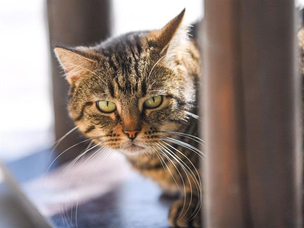 Katzen - Chippen  empfohlen